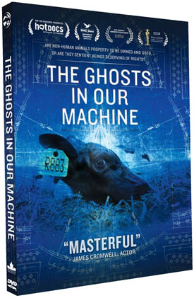 ghostsinourmachine